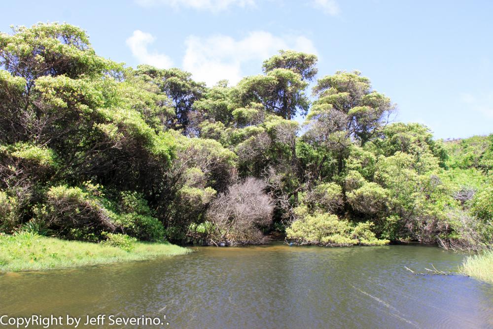 Mangue Insular de Noronha - Turismo on Line