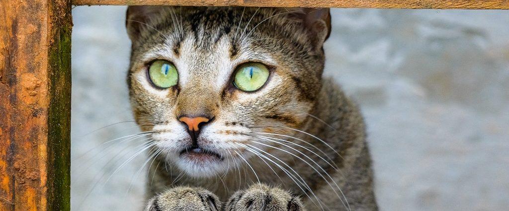 Curso de fotografia de animais de estimação em Florianópolis