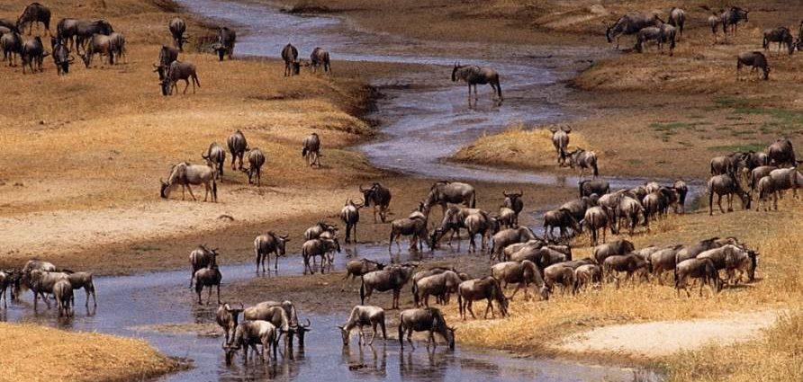 Brasil e Tanzânia intensificam relações na área de promoção turística internacional