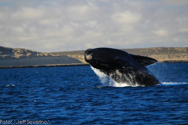 A retomada da atividade nesta temporada de 2019 consiste no monitoramento do comportamento das baleias