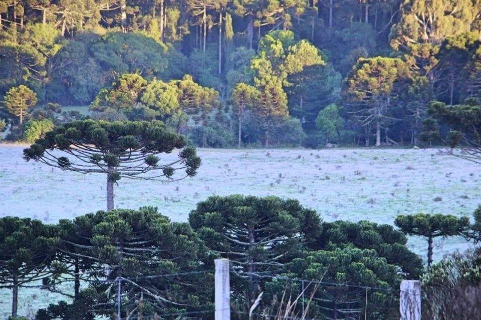 A Serra Catarinense obteve um novo registro de geada durante o amanhecer desta sexta, 06 de Dezembro de 2019