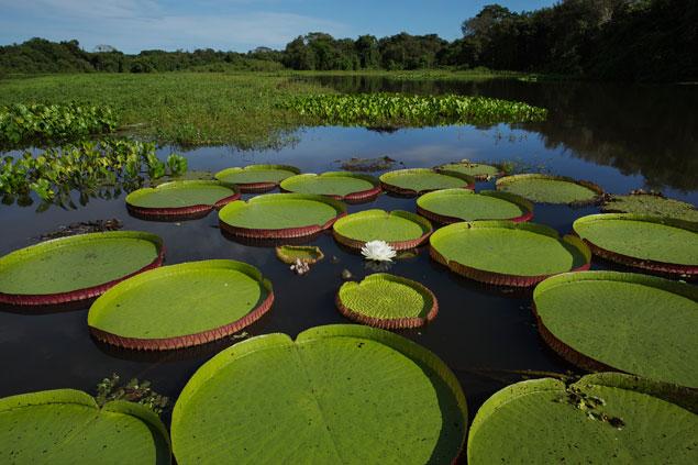Localizado no bioma mais bem preservado do País, Alto Pantanal foi criado para pensar em oportunidades de negócios e melhorias para a cadeia do turismo regional