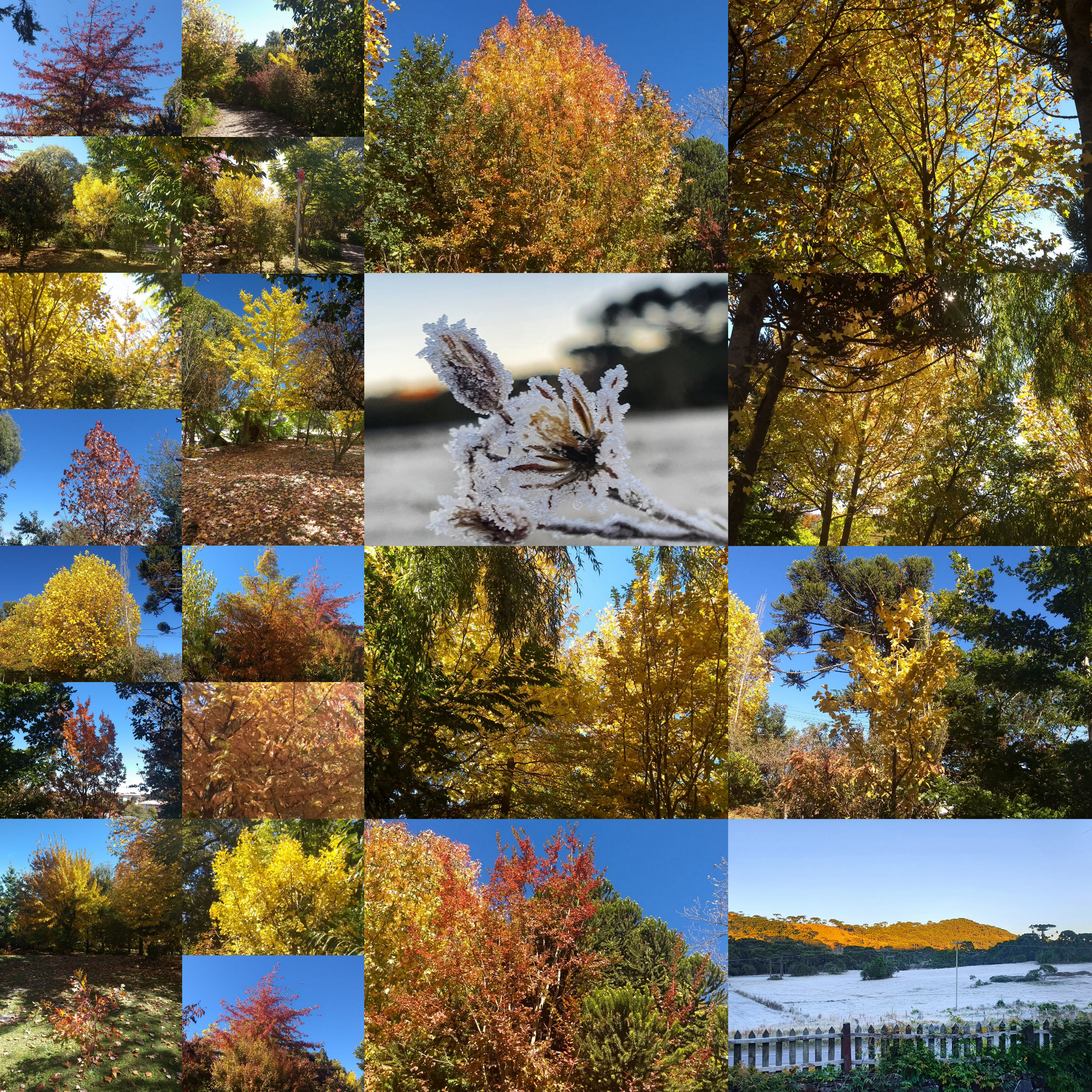 As cores do outono e o frio encantam a Serra Catarinense atraindo os turistas