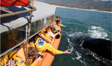 Santa Catarina mantém o turismo de avistamento de baleias fechado