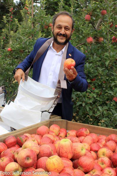 Aberta a maior e melhor temporada da colheita da maçã em Fraiburgo SC