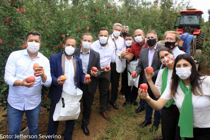 Aberta a maior e melhor temporada colheita da maçã em Fraiburgo SC