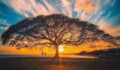 Nada se perde, nada de cria, todo segue em grande transformação